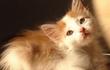 Кошечка Ася - настолько милый и активный