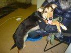 Фото в Собаки и щенки Продажа собак, щенков Добрый, неприхотливый, игривый. Обещает стать в Москве 0