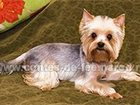 Фото в Домашние животные Услуги для животных Стрижка и тримминг Вашей собаки профессионально. в Москве 1