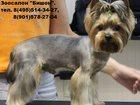 Фото в Собаки и щенки Стрижка собак Профессиональна стрижка йоркширского терьера. в Москве 0