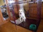 Скачать бесплатно foto Разное Клетки для собак -хулиганов 32700096 в Санкт-Петербурге