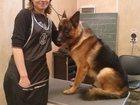 Скачать фотографию  Стрижка собак и кошек на дому в ВАО, ЮВАО 32805649 в Москве