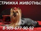 Фотография в Кошки и котята Продажа кошек и котят Предлагаем к вашему Вниманию! ! ! свои услуги в Старая Купавна 100