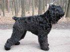 Скачать бесплатно фото  Передержка собак на западе Москвы 32937834 в Москве