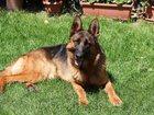 Смотреть изображение  Квартирная передержка собак в Москве 33014601 в Москве