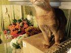 Изображение в Кошки и котята Продажа кошек и котят Продаются замечательные, шустрые и ласковые в Москве 10000