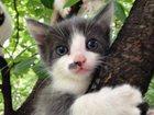 Фото в Кошки и котята Продажа кошек и котят Котята в дар от домашних кошек рождения 3 в Москве 0