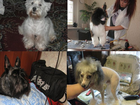 Изображение в Домашние животные Услуги для животных Йорки 1100 рублей  На исходе лета ваш питоец в Москве 0
