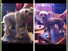 Фотография в Собаки и щенки Стрижка собак Стрижка (тримминг) Вашего питомца у Вас на в Москве 1000