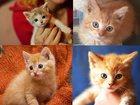 Фотография в   Отдаются в дар малыши котятки разных окрасов. в Москве 100