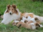 Фотография в Домашние животные Услуги для животных Профессиональный инструктор по вязке собак. в Москве 0
