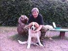 Скачать бесплатно foto Вязка собак Дрессировка собак в Москве 34259289 в Москве