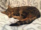 Изображение в   Отдадим в добрые руки найденыша котенка Тео, в Москве 0