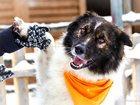 Изображение в   Добрейший души пес ищет своего хозяина. Молодой в Москве 0