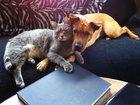 Изображение в Кошки и котята Продажа кошек и котят У меня есть свой приют для бездомных животных. в Москве 55