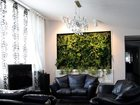Фотография в Недвижимость Аренда жилья Студия фитодизайна GardenCityпредлагает в Москве 1000