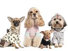 Увидеть foto  Одежда для собак от URBAN DOGS опт и розница 35349562 в Москве