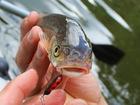 Фотография в   Жук предназначен на ловли рыбы, основной в Уфе 140