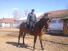 Смотреть изображение  Постой лошадей в черте города 36624593 в Нижнем Новгороде