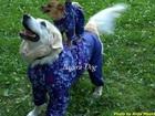 Фотография в Домашние животные Услуги для животных Открылось ателье по пошиву одежды для Ваших в Москве 0