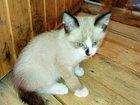 Фотография в   Ищут дом очаровательные котята. Все здоровы, в Москве 0