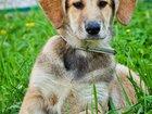 Изображение в Отдам даром - Приму в дар Отдам даром Знакомьтесь с умным и красивым щенком Лесси. в Москве 0