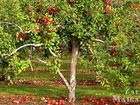 Смотреть foto  Обрезка плодового сада, 36985369 в Зернограде