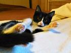 Фотография в   Фиона-котеночек 3мес. ищет родную человеческую в Москве 0