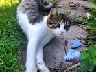 Изображение в   Молодой общительный кот Барсик ищет хозяина в Москве 0