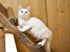 Фотография в   Ищет свою семью жизнерадостный пушистый котенок в Москве 0