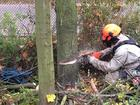 Фотография в   Хотите срочно спилить дерево? Мы готовы сделать в Москве 550