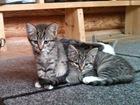 Фото в   Чудесным котодетям очень нужен дом! Три девочки, в Москве 0