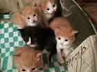 Фото в Кошки и котята Продажа кошек и котят Отдаем в добрые руки котят. Мама-кошка привита, в Москве 0