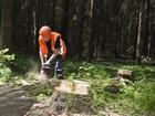 Изображение в   Выполним весь цикл работ по удалению деревьев! в Москве 0