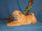 Фото в Собаки и щенки Продажа собак, щенков Питомник Золотая рыбка Ркф Москва, предлагает в Москве 35000
