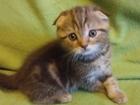 Фотография в Кошки и котята Продажа кошек и котят Самый лучший подарок на Новый Год- это такой в Москве 3000