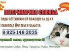 Фотография в   Ветеринарная помощь на дому и в клиниках. в Москве 500