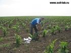 Фотография в   Проводим агрохимический анализ почвы на содержание в Краснодаре 5000