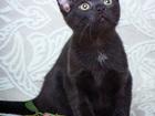 Фотография в Кошки и котята Продажа кошек и котят Ночка, она же Нюся, в грации пантеры с быстротой в Москве 0