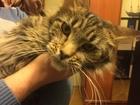 Свежее фото Вязка собак Кошечка для вязки 38594817 в Москве