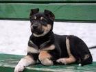 Изображение в   Отдается в добрые руки щеночек девочка, возраст в Москве 0