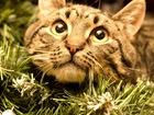 Изображение в   Скромный котик Тимофей ищет свою семью. Тима в Москве 0