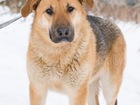 Фото в   Пуша-собака с большим любящим сердцем, очень в Москве 0