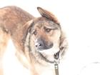 Фото в Собаки и щенки Продажа собак, щенков Привет, я Грант! Я помню свою весёлую и счастливую в Лобне 1