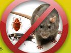 Уникальное фотографию  Качественное уничтожение клопов, тараканов, крыс, 38721095 в Москве