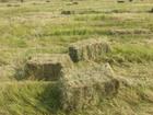 Изображение в   Сено представляет собой высушенную траву. в Бронницы 300