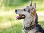 Новое изображение  Замечательная собачка Лотта в добрые руки, 39011775 в Москве
