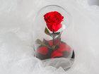 Уникальное фото  Роза Notta&Belle в стеклянной колбе - удивительный подарок по любому случаю 39048036 в Комсомольске-на-Амуре