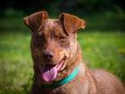 Просмотреть изображение  Супер собака Риджби в добрые руки, 39304265 в Москве