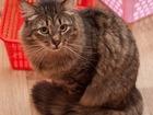 Свежее изображение  Сибирский кот в надежные руки 39345775 в Москве